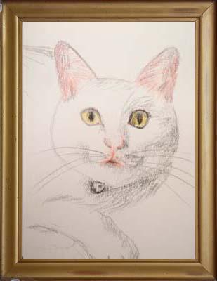 cat1508