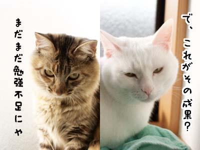 cat1517