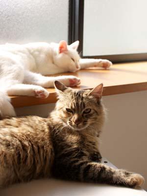 cat1520