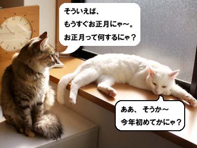 cat1521