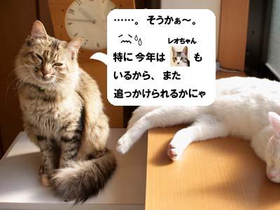 cat1523