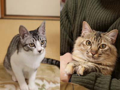 cat1525