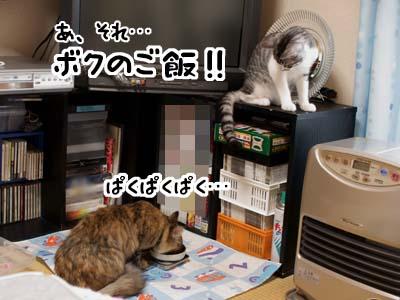 cat1527