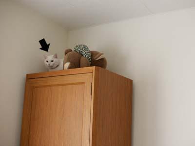 cat1529