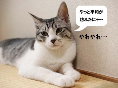 cat1536