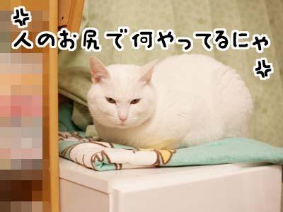 cat1539