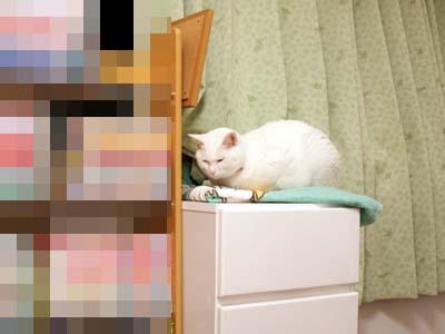 cat1540