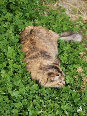 cat1547