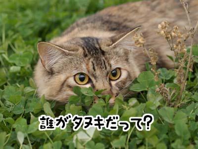cat1548