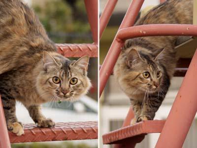 cat1549