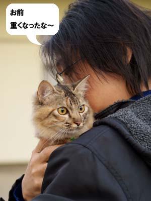 cat1550