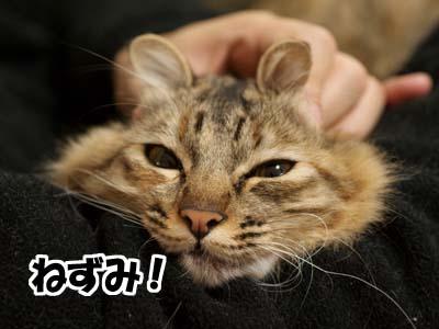 cat1553