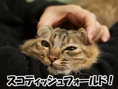 cat1554