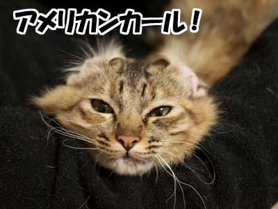 cat1555