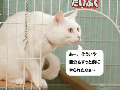 cat1556