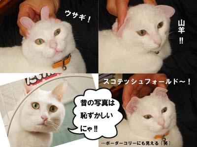 cat1557