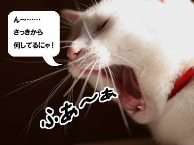 cat1561