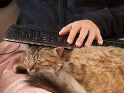 cat1563