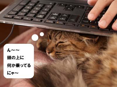 cat1564