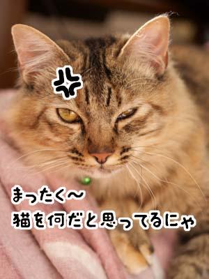 cat1565