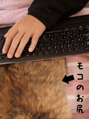 cat1566