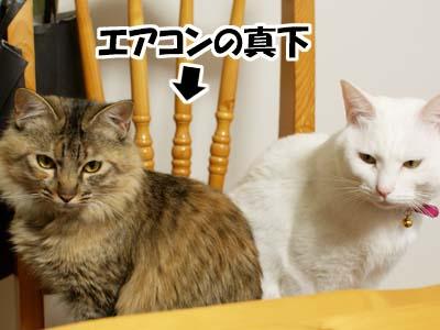 cat1567