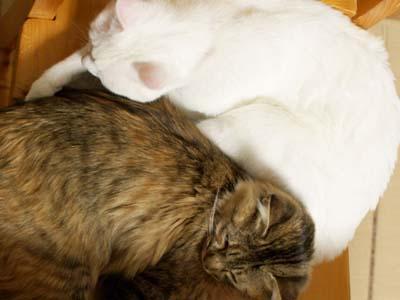 cat1568
