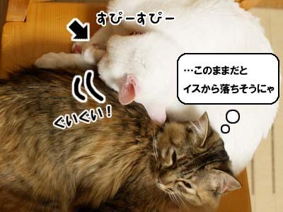 cat1569