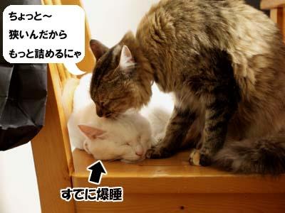 cat1570