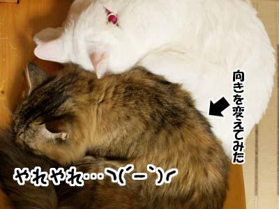 cat1571