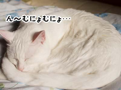 cat1573