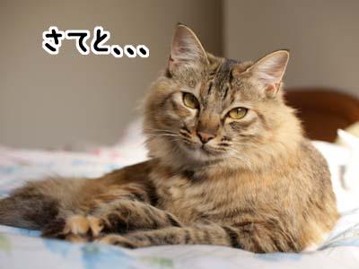 cat1574