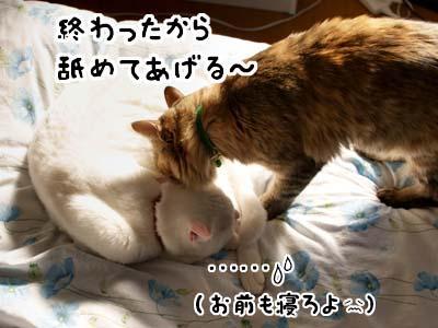 cat1575
