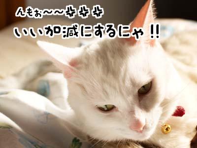 cat1576