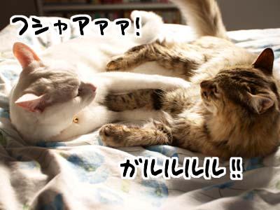 cat1577
