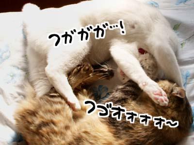 cat1578