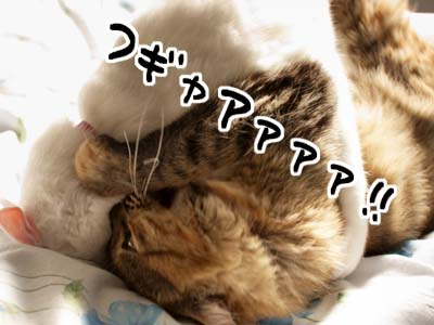 cat1579