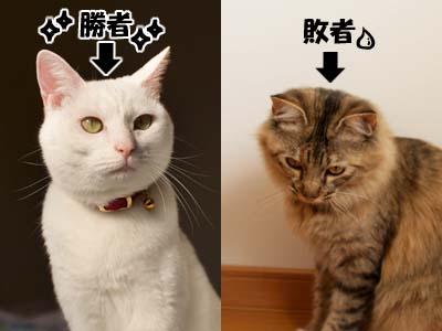 cat1581