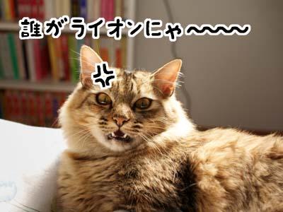cat1583