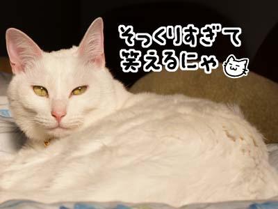 cat1584