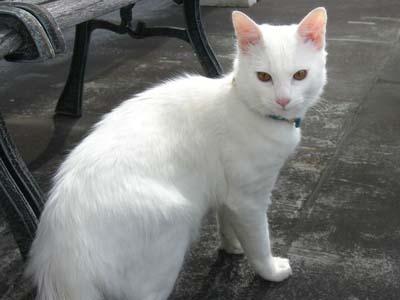 cat1585