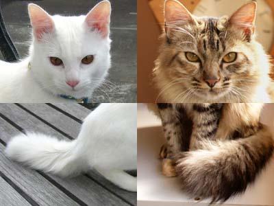 cat1586