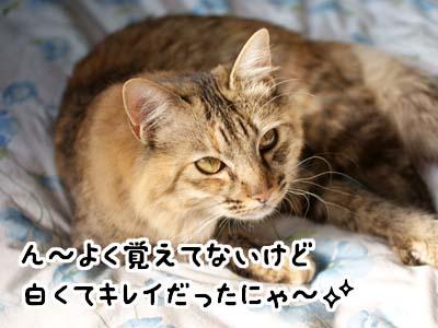 cat1587