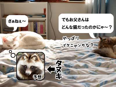 cat1588
