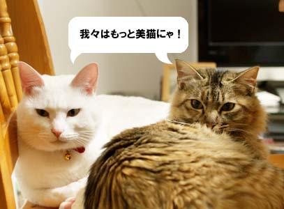 cat1591
