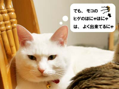 cat1592