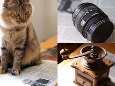 cat1594