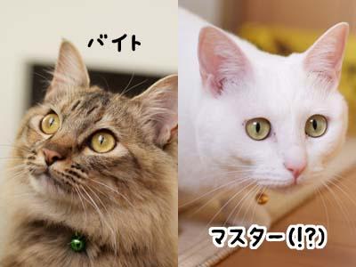 cat1596