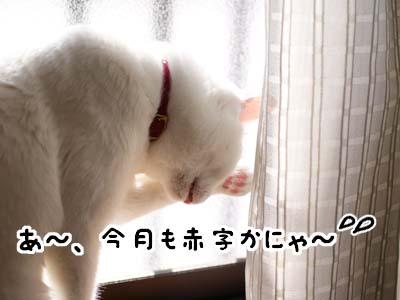 cat1598