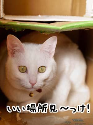 cat1600